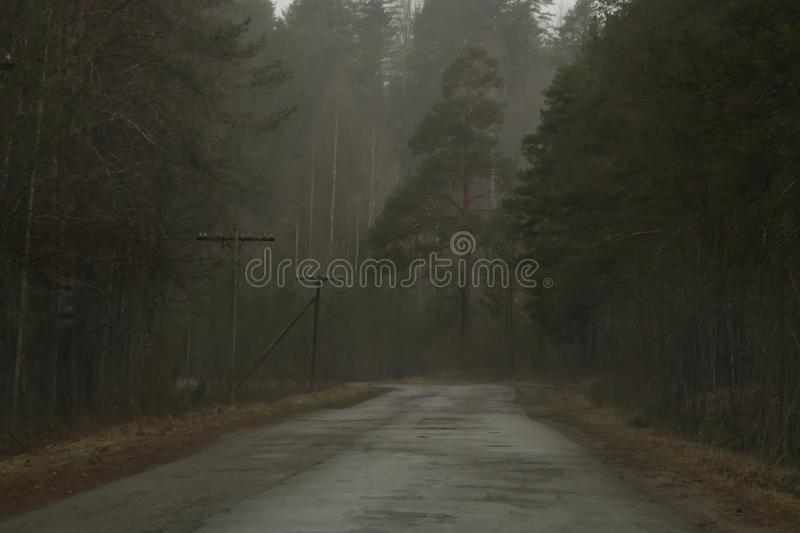 Country road through the forest in overcast day royalty free stock photo