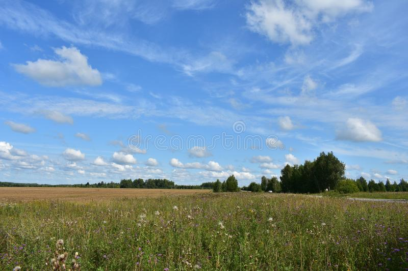 Country road grass field flowers forest trees in the sky floating clouds royalty free stock photo