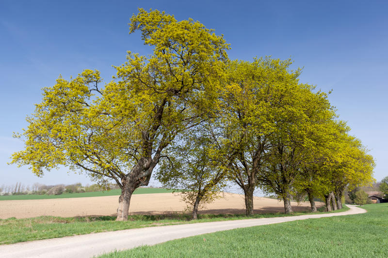 Download Country Road With Green Avenue Stock Photo - Image: 30628486