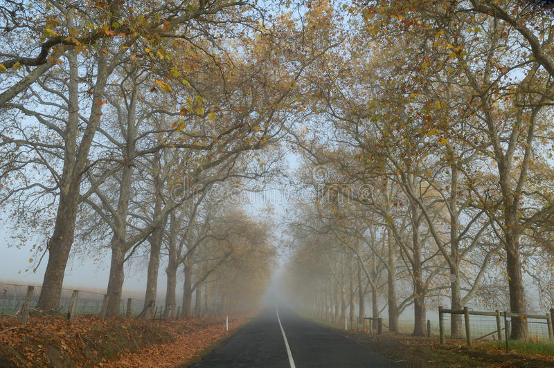 Country road in the late autumn morning, Adelaide Hills royalty free stock photography