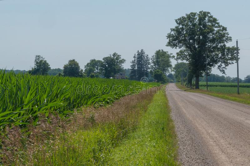 Country road landscape leading into the picture with corn growi royalty free stock photo