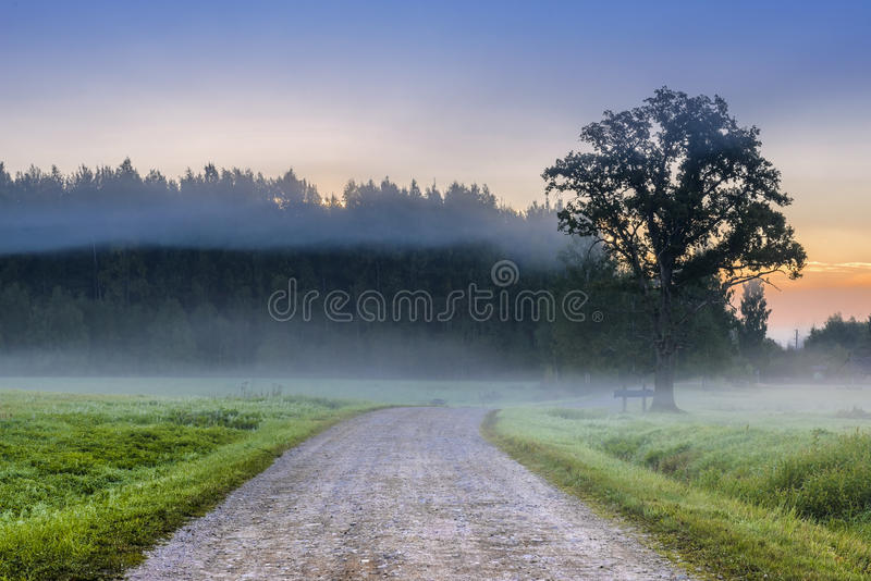 Country road in the mist, Latvia. Morning view at the country road in the mist, Vidzeme, Latvia stock image