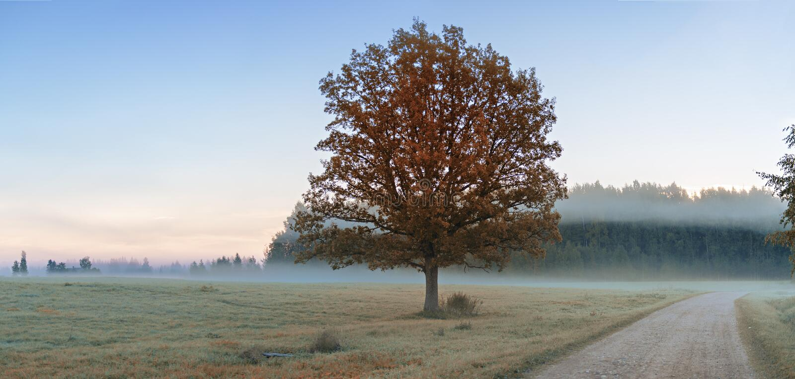Country road in the mist, Latvia. Morning view at the country road in the mist, Vidzeme, Latvia royalty free stock images