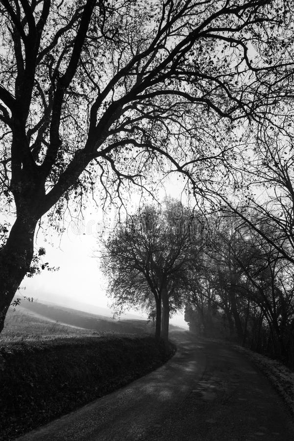 Country road and mist royalty free stock photo