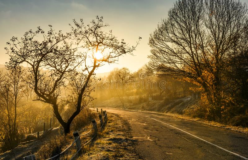 Country road in morning fog royalty free stock images