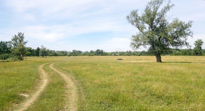 Country road. Near Arad Romania royalty free stock photos