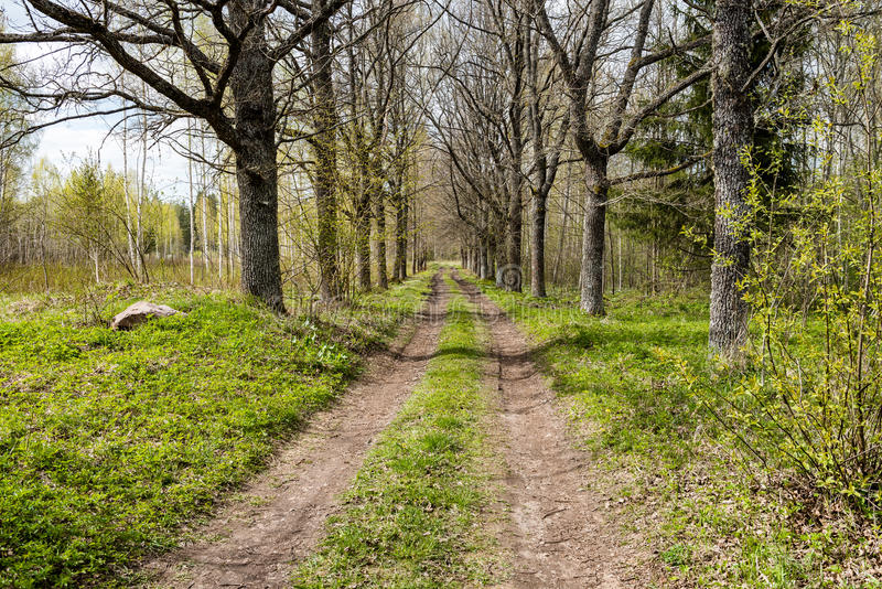 Country road. In perspective in summer forest with trees and grass stock image