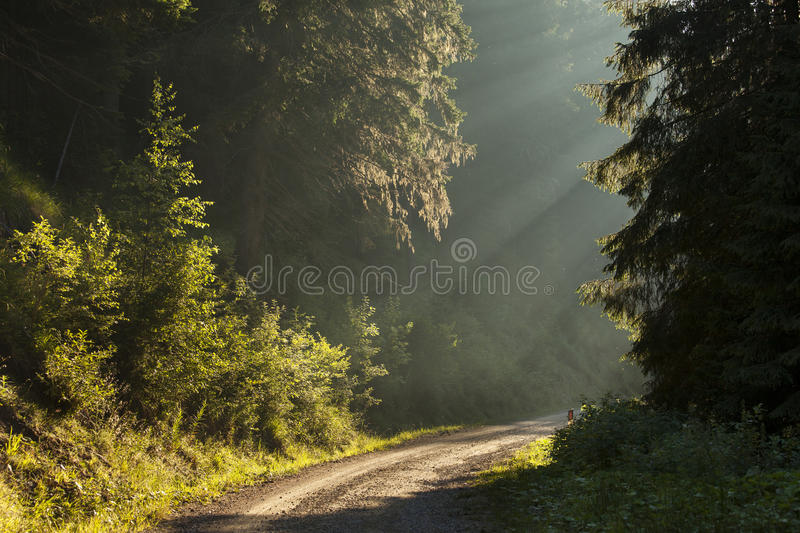 Country road running through the spring stock photos