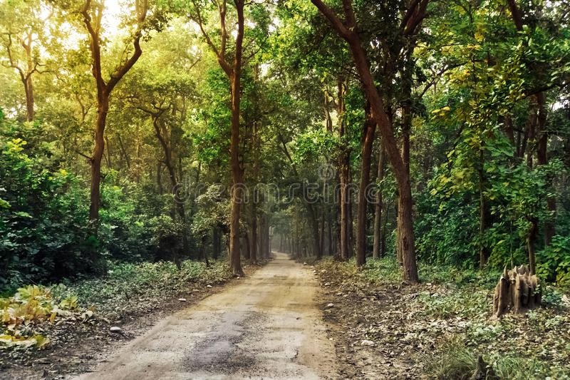 Country road running through tree alley. Off-road traffic. landscape with perspective. long forest road going into the forest thic royalty free stock photos