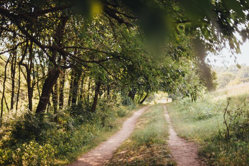 Country road running under the trees. Summer royalty free stock photo