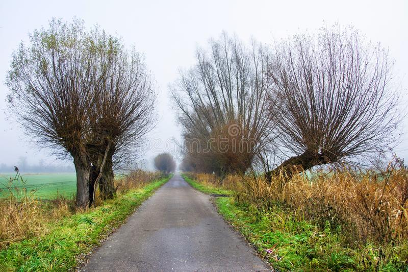 Country road and trees, beautiful landscape, fog stock images