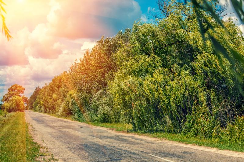 Country road with trees on the roadside. Rural landscape, country road with trees on the roadside in summer and beautiful cloudy sky royalty free stock images