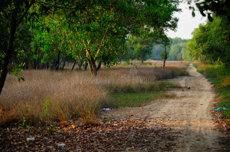 Country Road Vietnam. A country dirt road on Can Gio area of Vietnam in the setting sun stock photo