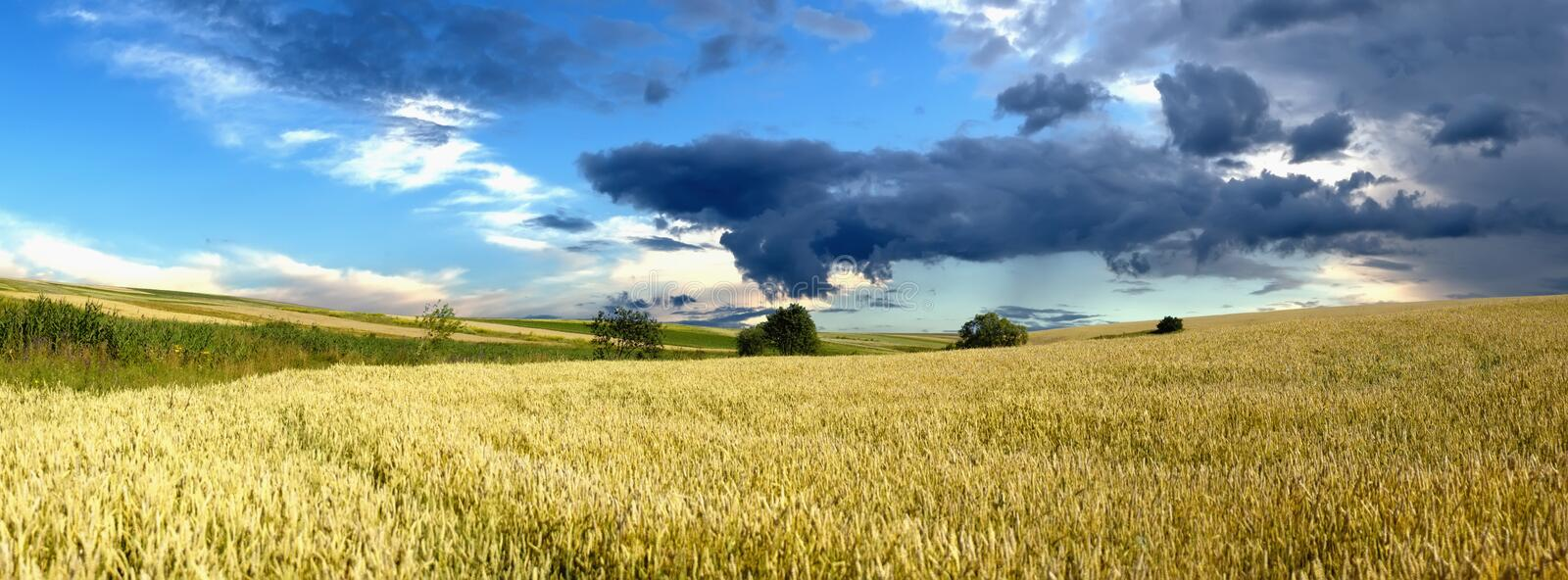 Country road in wheat field royalty free stock images