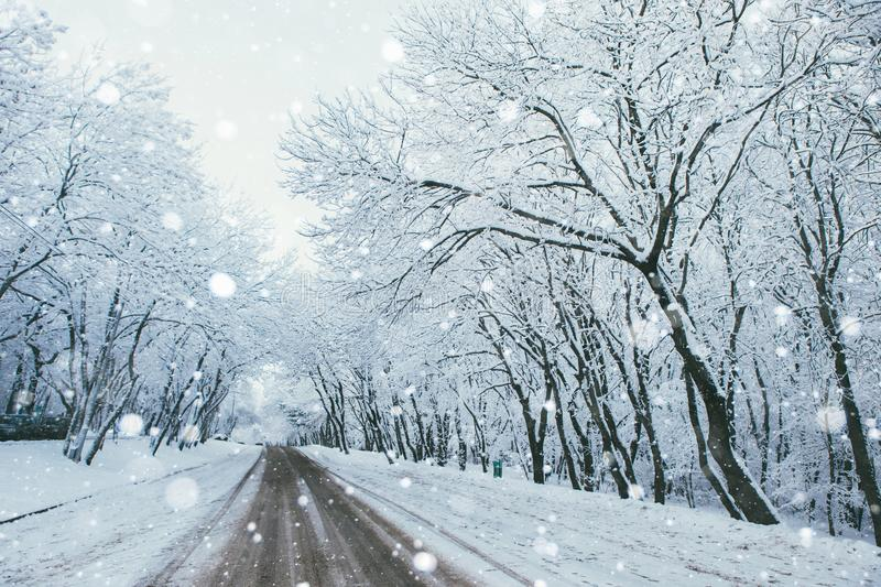 Country road in winter. Clean asphalt, nobody royalty free stock photography