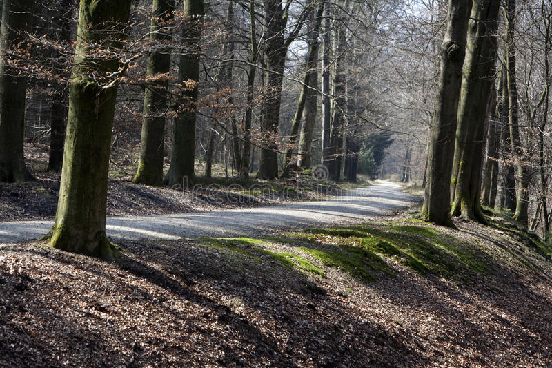 Country road through the woods royalty free stock photography