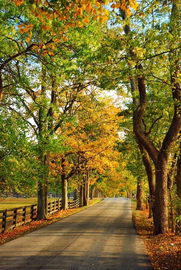 Free Country Roads Stock Photos - 101696713