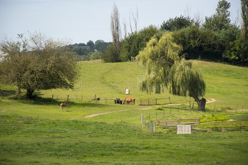 Country scene with horses in the meadow stock photo