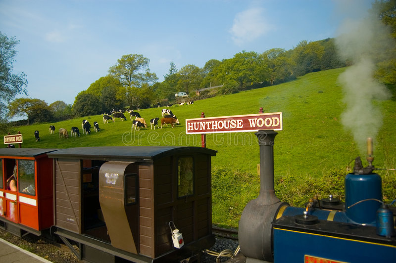 Country scene and little train. The little train and a country cattle scene, at rudyard,near leek, staffordshire, united kingdom stock photos