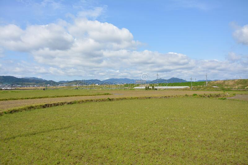Country scene in spring sunny day of Japan. The country scene in spring in a sunny day in Japan, little plants in the farmland , the cloud in the blue sky, the royalty free stock images