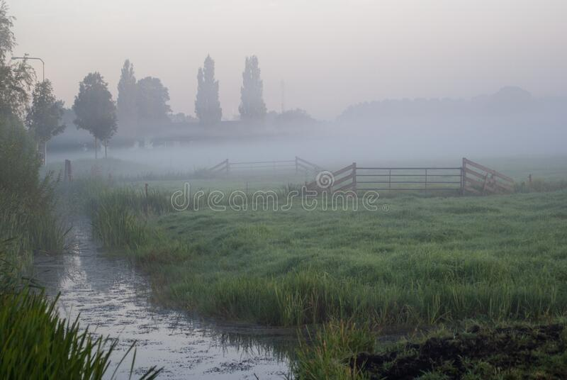 Country scenery of a field covered in the morning fog in Holland. A country scenery of a field covered in the morning fog in Holland royalty free stock images