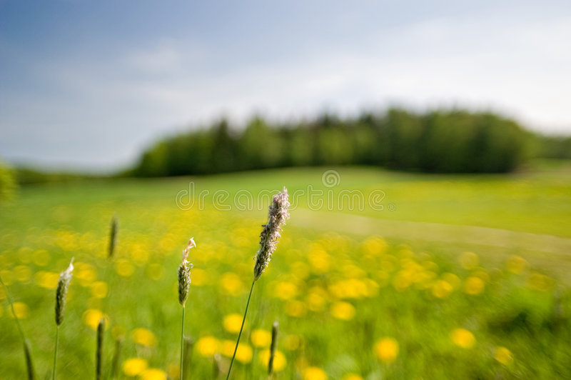 Country Side stock photos
