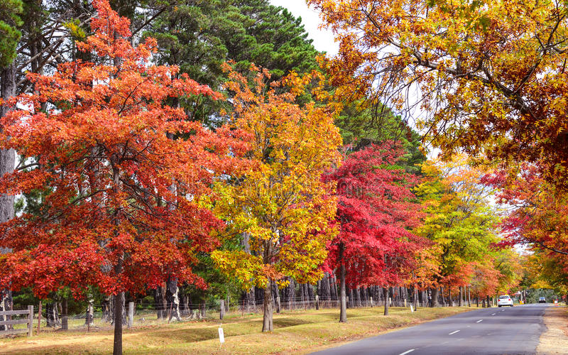 Country side in Australia. Country side road in Autumn near melbourne australia royalty free stock image