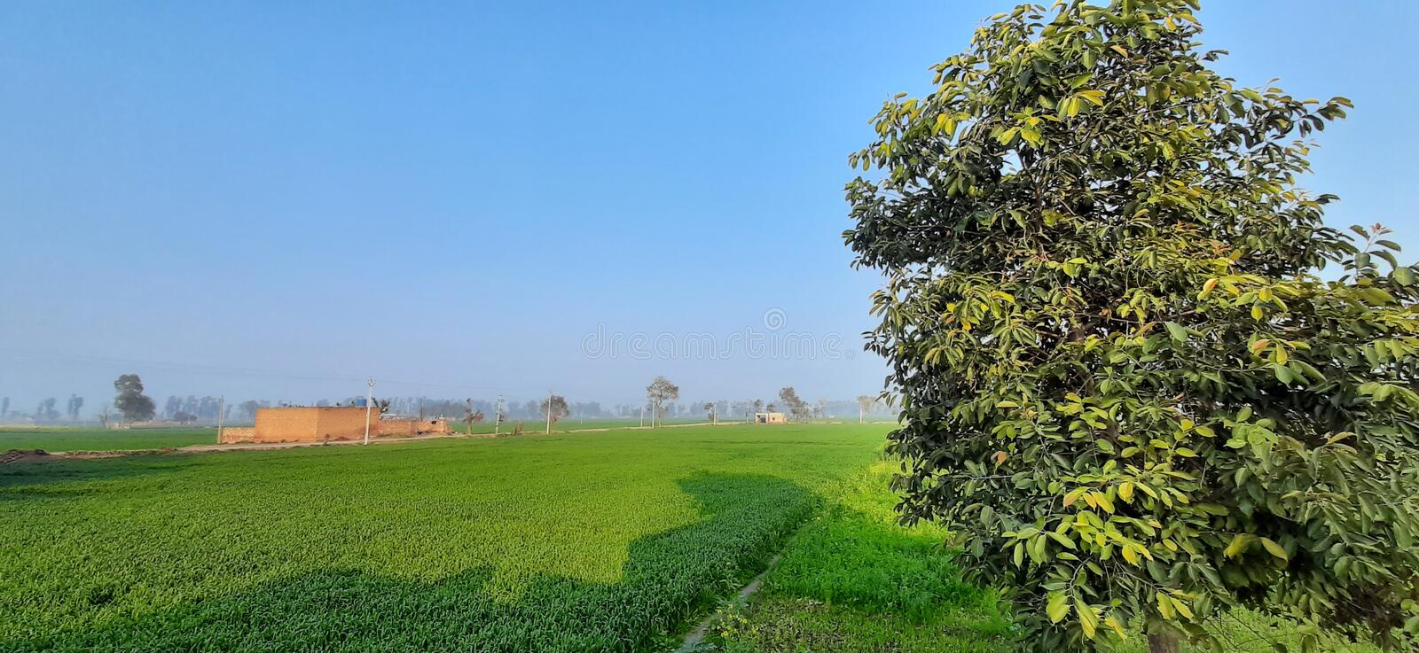 Country side view of Green field and blue sky. This photo was taken in Punjab State of India stock image