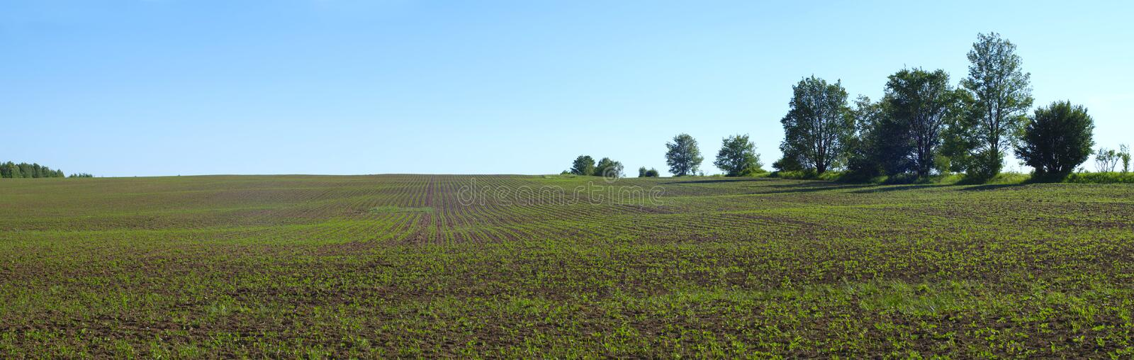Country spring field organic agriculture panoramic farming land stock photo