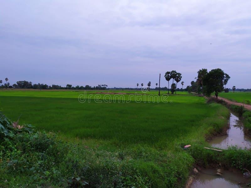 Country road thailand tree beatifull rice mountian green field lake stock photos