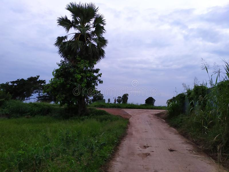 Country road thailand tree beatifull rice mountian green field lake royalty free stock images