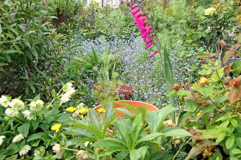 Country wild garden. Photo of a pretty wild plants and flowers growing in a kent country garden. May 2016 stock images