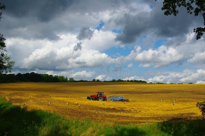 Countryfield krajobraz - żniwo i bocian zdjęcie stock