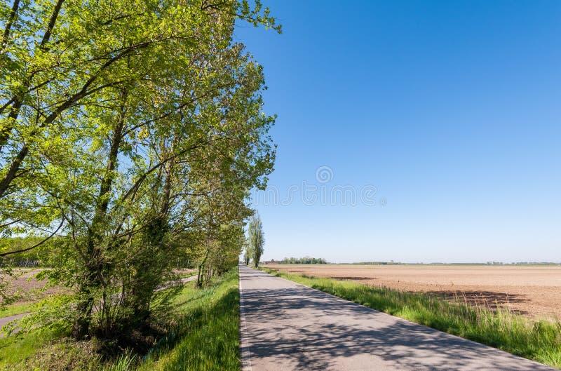 Countryroad et arbres image libre de droits