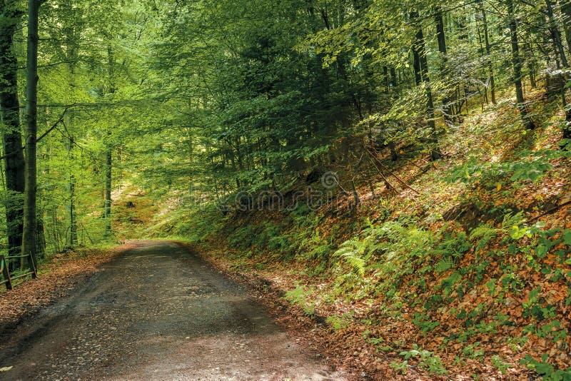 Countryroad par la for?t primitive de h?tre photos libres de droits
