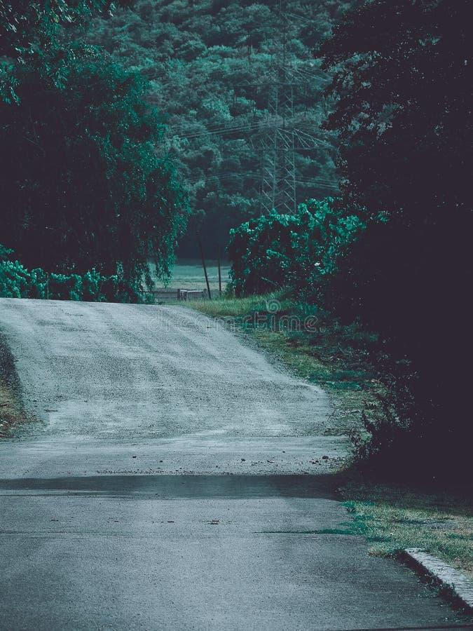 Countryroad rural menant dans les vignobles photo stock
