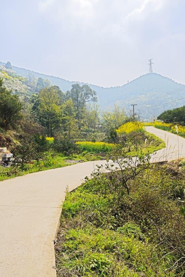 Countryroad som är buktig i blomningberg på den soliga våren royaltyfri fotografi