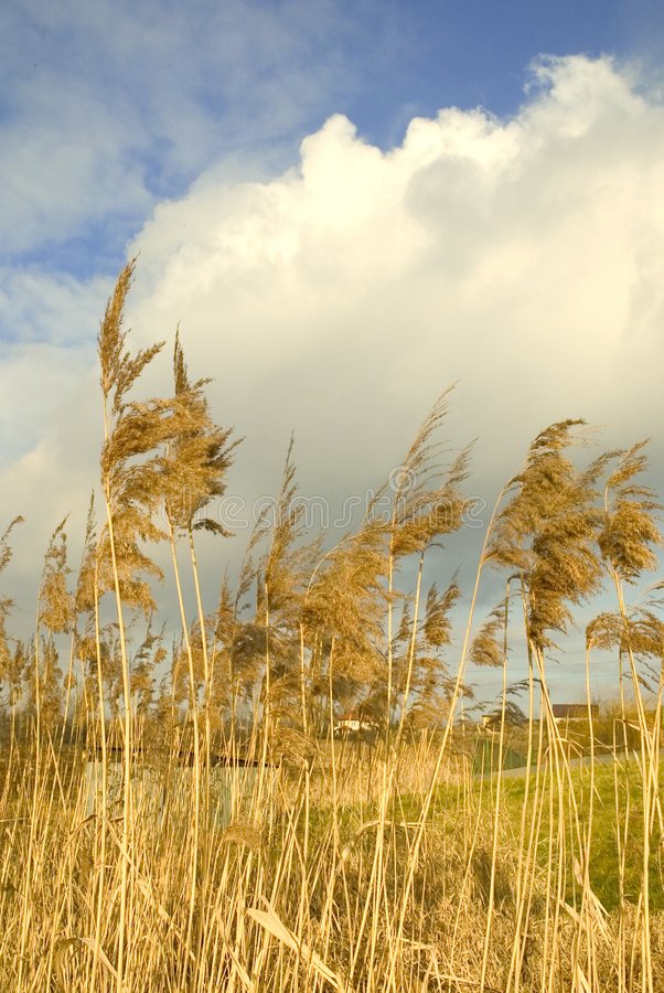 Download Countryside stock image. Image of view, clouds, landscape - 1941661