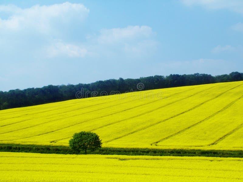 Countryside stock photos
