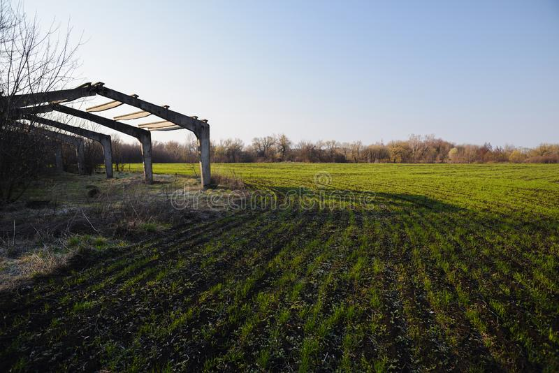 Countryside agricultural landscape. Abandoned greenhouse carcass in field of spring crop with blue sky stock photos
