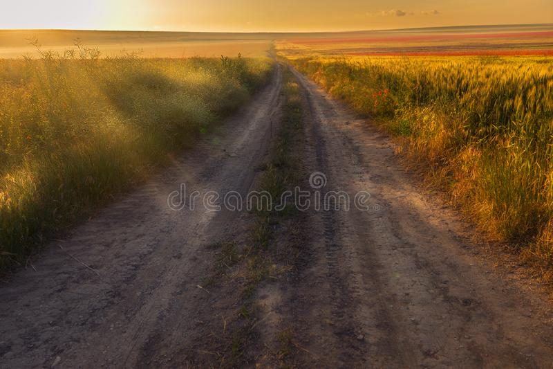 Countryside dirt road passing through a wheat field with poppies stock photo