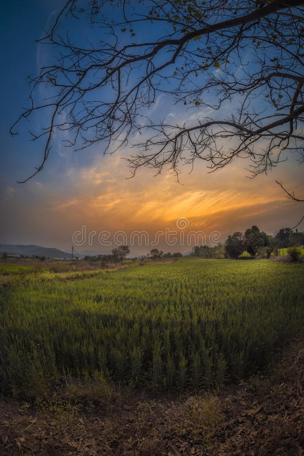 Countryside evening time royalty free stock image