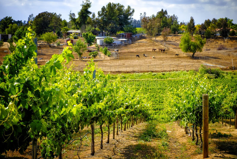 Countryside and Grape Vines, Temecula, California royalty free stock images