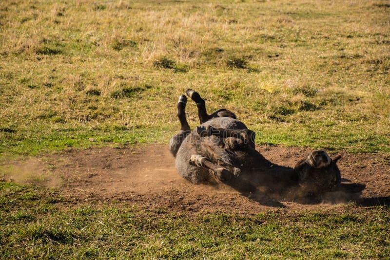 Countryside happy donkey royalty free stock images