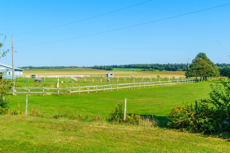 Countryside and horses near North Carleton, PEI. View of countryside and horses near North Carleton, Prince Edward Island, Canada royalty free stock photo