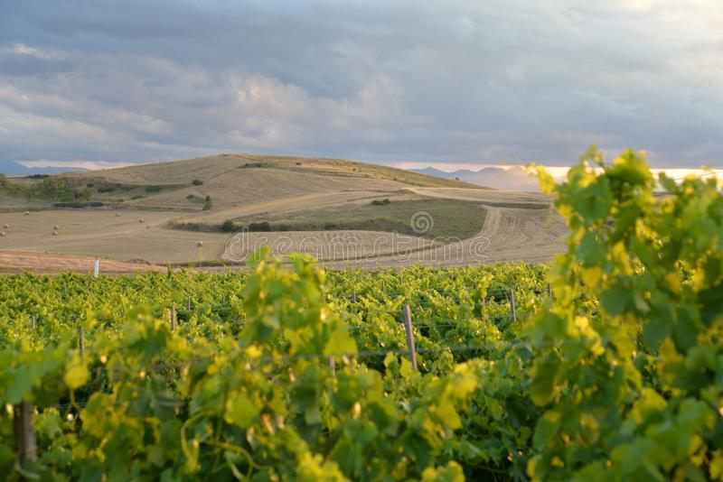 Region of Sardinia, Italy. Vineyard landscape stock images