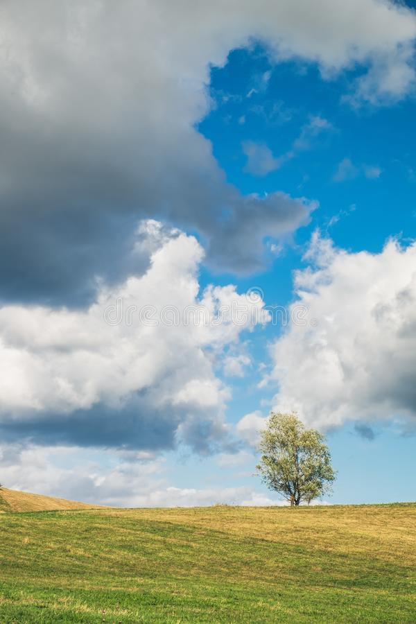Countryside landscape: green field and lonely tree. A typical natural landscape: yellow and green fields and lonely tree. Daytime countryside landscape under royalty free stock image