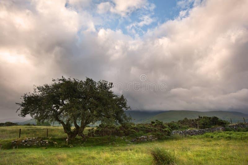 Download Countryside Landscape Panorama Stock Image - Image of scene, beautiful: 25980789