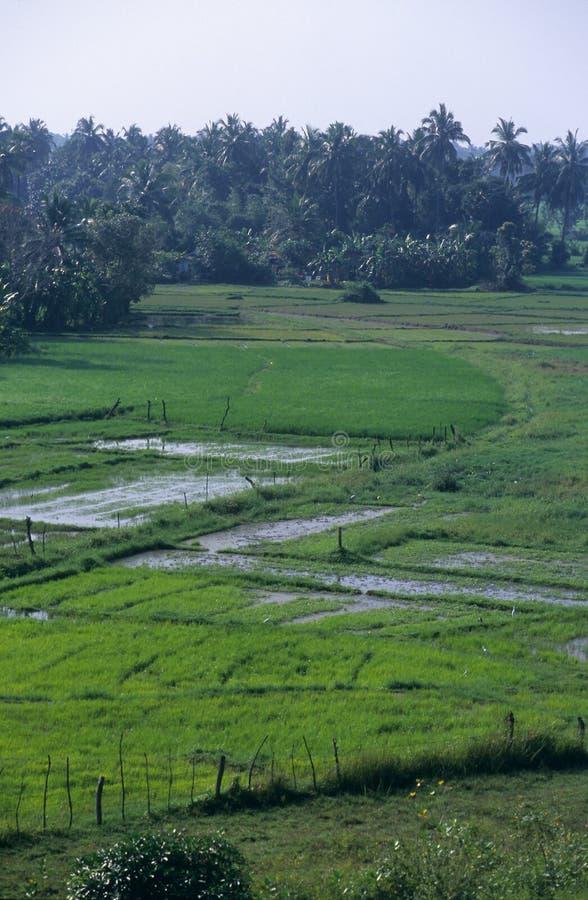 Download Countryside Landscape, Sri Lanka Stock Image - Image: 23716913