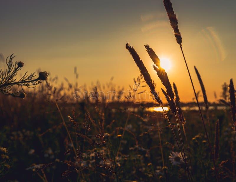 Splendid countryside landscape before sunset royalty free stock images